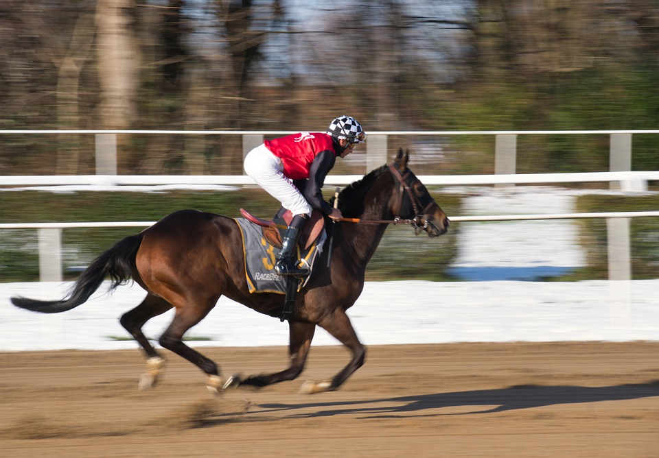 horse track racing